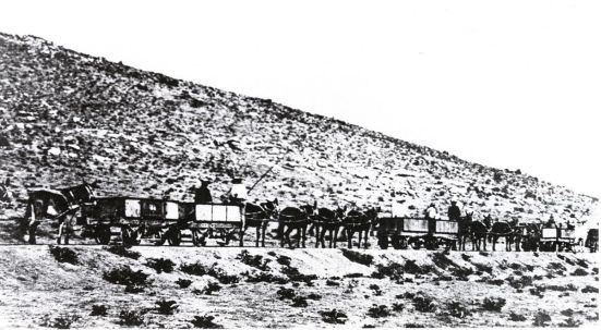 Namaqualand_Railway_mule_train
