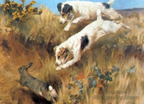 741I HUNTING FOX TERRIERS