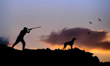 Best-Hunting-Dogs-for-All-Types-of-Game-Hunting
