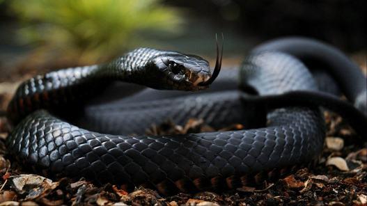 snake-2