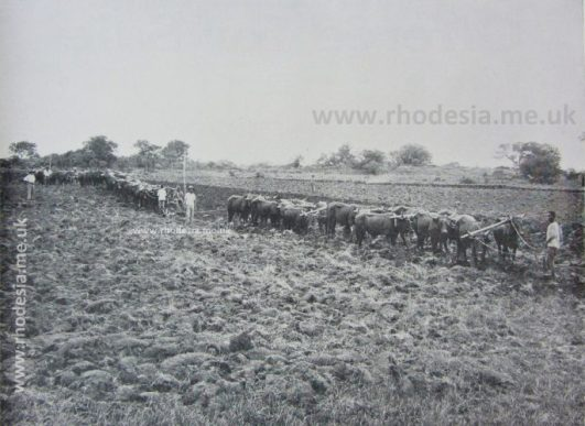 Ploughing-by-Oxen-c-1925_final3LR-685x500